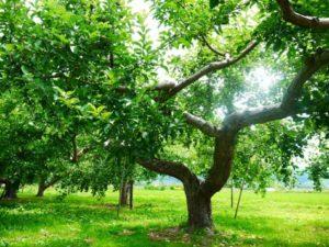 Dr.Lukeのワンショット@vimeo:善と悪を知る知識の木といのちの木
