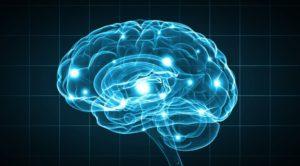 山本太郎現象は大脳辺縁系の反応である